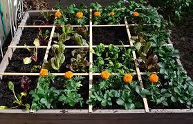 square foot gardening bonnie plants