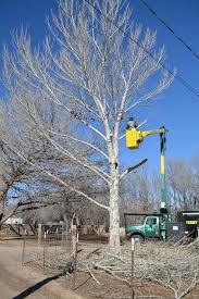 tree trimming commercial and residential tree service in los lunas nm terrys s23