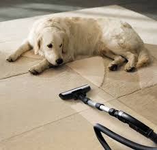 home interior soar clean dog urine from rug best stain removal tricks for your clothes
