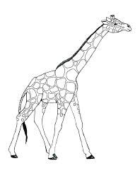 Baby Giraffe Pictures To Color Giraffe Colouring Pages Printable