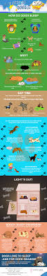 Dog Sleep Pattern Adorable Dog Sleep Archives