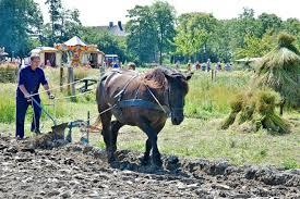 Bieten Paarden En Vlas Op Landgoed Verhildersum Leens Groot Groningen