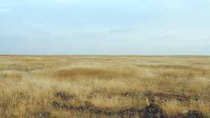 dry grass field background. Field On A Background Of The Blue Sky - HD Stock Video Clip Dry Grass E