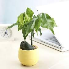 office flower pots. SKU1657005.jpg Office Flower Pots N