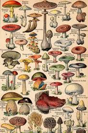 French Color Chart 1930 Edible And Poisonous Mushrooms