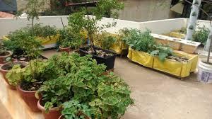 the healthy garden of dr vishwanath