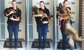 Reddit Couple Document Their Dogs Extraordinary Growth