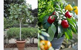 create bags of extra space and a visually stunning effect in your garden by using strategically placed pots to grow fruit and veg