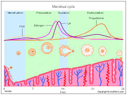 Period Cycle Chart The Diet Chart For Your Healthy Periods Oowomaniya