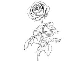 Disegno Di Rosa Migliori Pagine Da Colorare