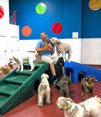 We have staff on site 24 hours a day. Dog Daycare In Tuckahoe Ny Paws And Play Pet Resort