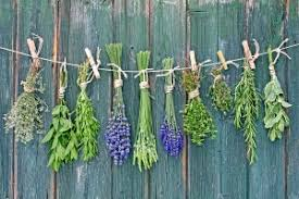 Small Picture Herb Garden Design Ideas For Every Taste and Preference