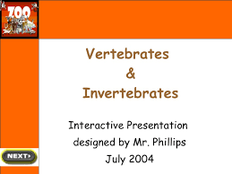 Endothermy Vs Ectothermy Venn Diagram Vertebrates And Invertebrates