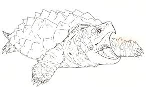 Small Picture How To Draw A Alligator Snapping Turtle Step By Step