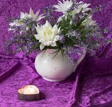 Spätsommerschönheit Dahlie Blumensteckbrief Artfleur