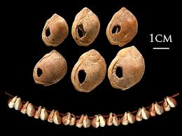 ancient archeological s beads of narius kraussi from blombos cave