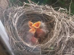 Birds Nest Bed Birds Playdough In The Parsonage