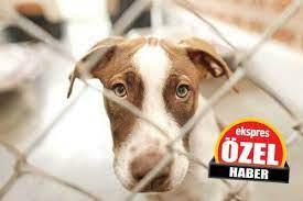 Hayvanları Koruma Kanunu tatmin etmedi / Antalya Ekspres