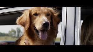 a dog s purpose bailey. Delighful Bailey U0027A Dogu0027s Purposeu0027 2017 Trailer With A Dog S Purpose Bailey 7