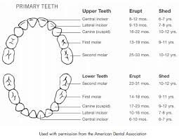 Teething Chart Babies Babys First Tooth 7 Facts Parents Should Know Healthychildren Org