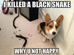 Animals with captions on Pinterest   Funny Animal, Cute animals ... via Relatably.com