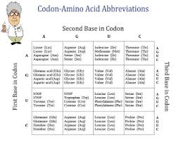 Use Your Codon Chart To Determine The Amino Acid Sequence Amy Brown Science New Free Item Chart Of Amino Acids And