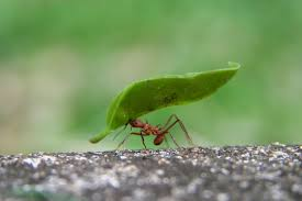 How To Get Rid Of Ants In The House How To Kill Pavement Ants