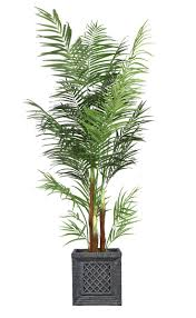 Laura Ashley 76 Inch Tall Areca Palm Tree * Check out this great product.