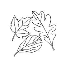 Bladeren Van Bomen Kleurplaat