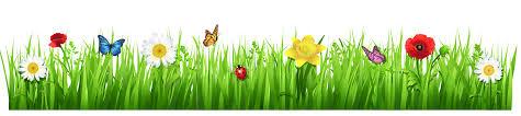 Image result for spring flowers no background