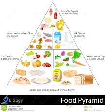 Food Group Pyramid Chart Food Pyramid Stock Vector Illustration Of Food
