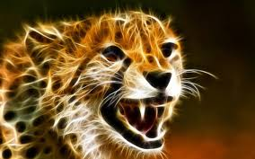 cheetah wallpapers 27 2560 x 1600