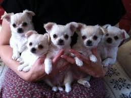 all the pups lexi 2nd from right