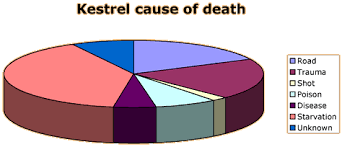 Chartjunk For Pie Charts