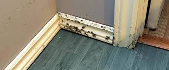 how do you get rid of mold in a basement mold removal city st city mold