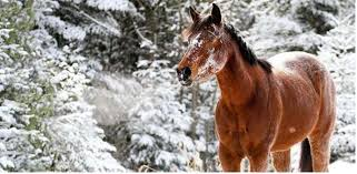 your horse s starts producing his winter coat as soon as the days start getting shorter smartpak photo