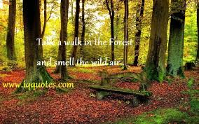 Forest Quotes Classy Forest Quotations Forest Quotes Forest Quotations And Nature Quote