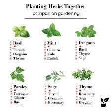 companion planting herbs in 2020