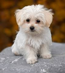 Image result for small dog