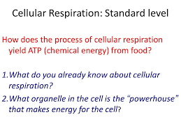 3 cellular respiration standard level