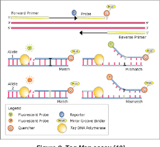 Figure 2 From Particularities Of Real Time Polymerase Chain Reaction