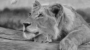 detailed lion drawings in pencil. Fine Drawings How To Draw A Realistic Tree Stump Tutorial  Pencil Drawing Techniques  YouTube Throughout Detailed Lion Drawings In E
