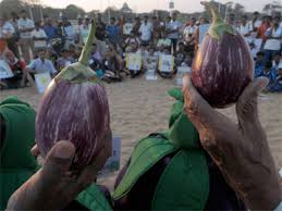 Maharashtra Firm To Seek Noc In Five States For Gm Brinjal