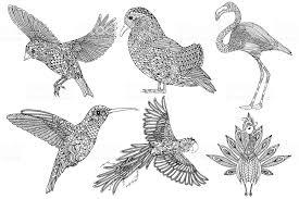 Collectie Van Handgetekende Vogels Kleurplaat Voor Volwassenen
