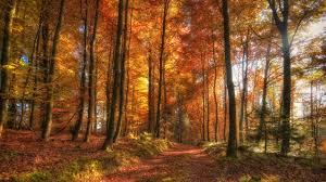 Golden Autumn Trees HD wallpaper « HD ...