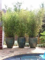 Best 25 Corner Landscaping Ideas On Pinterest  Corner Plant Ideas For Backyard