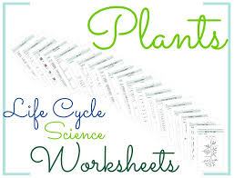Plants Life Cycle Science Worksheets   [BGS] My Products ...