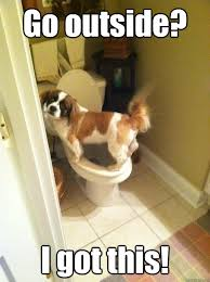 the potty trained Dog memes | quickmeme via Relatably.com