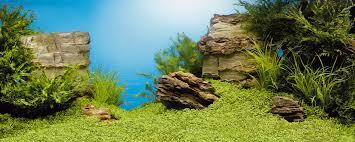 Aquarium Backgrounds Juwel Extra Large Double Sided Poster Aquarium Background Xl Fish