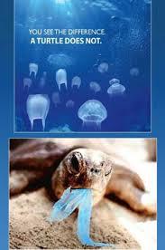 Výsledek obrázku pro you see the difference a turtle does not
